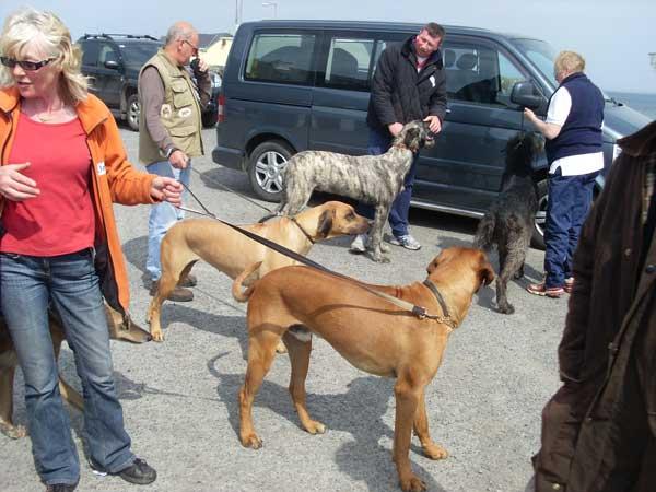 Sligo Walk 2009