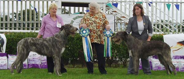2 Best Bitch and Reserve BB_IWS of Ireland Open show July 25_2010_light2